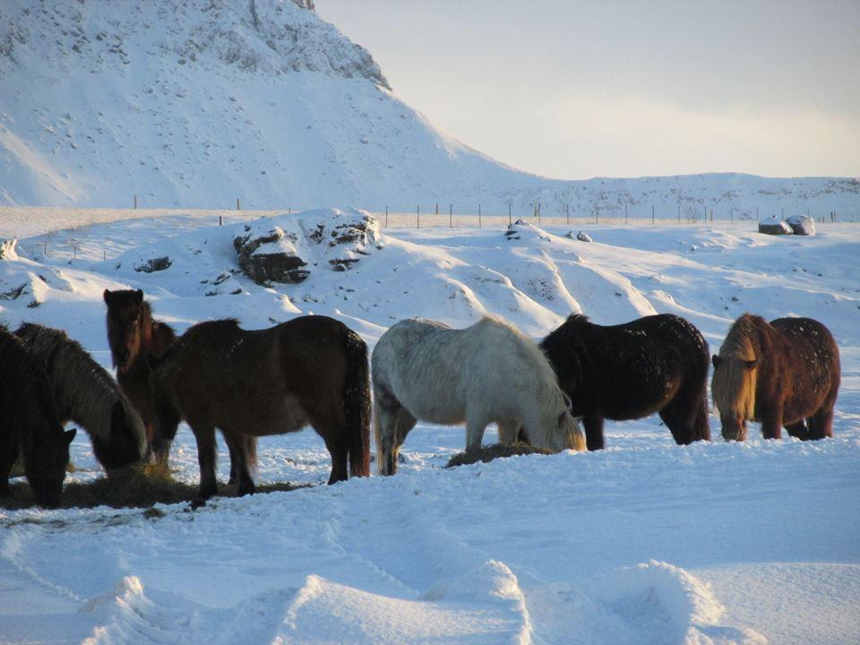 Eindecken von Pferden – ein ständig kontroverses Thema