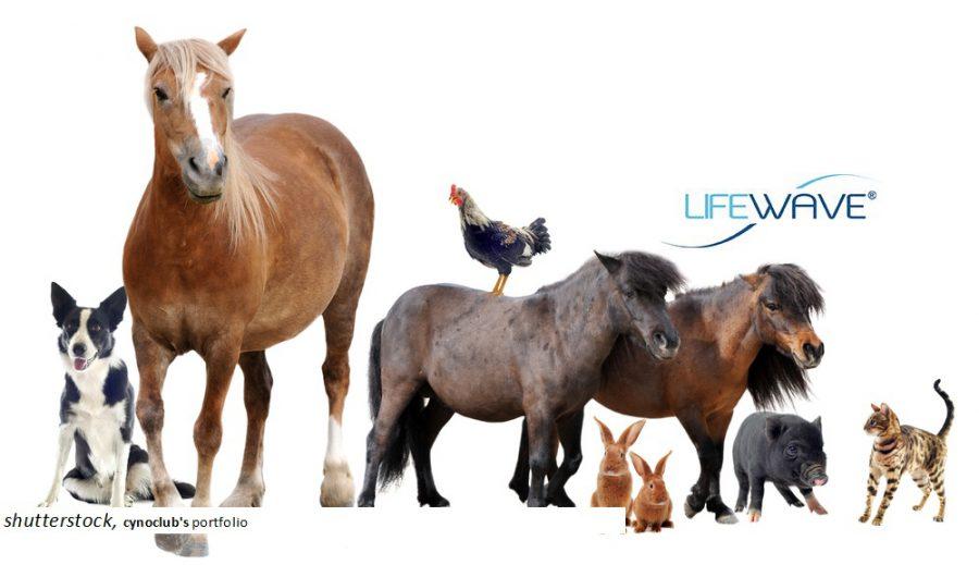 """Einführungsvortrag: """"Die Anwendung der LifeWave Patches bei Tieren"""""""
