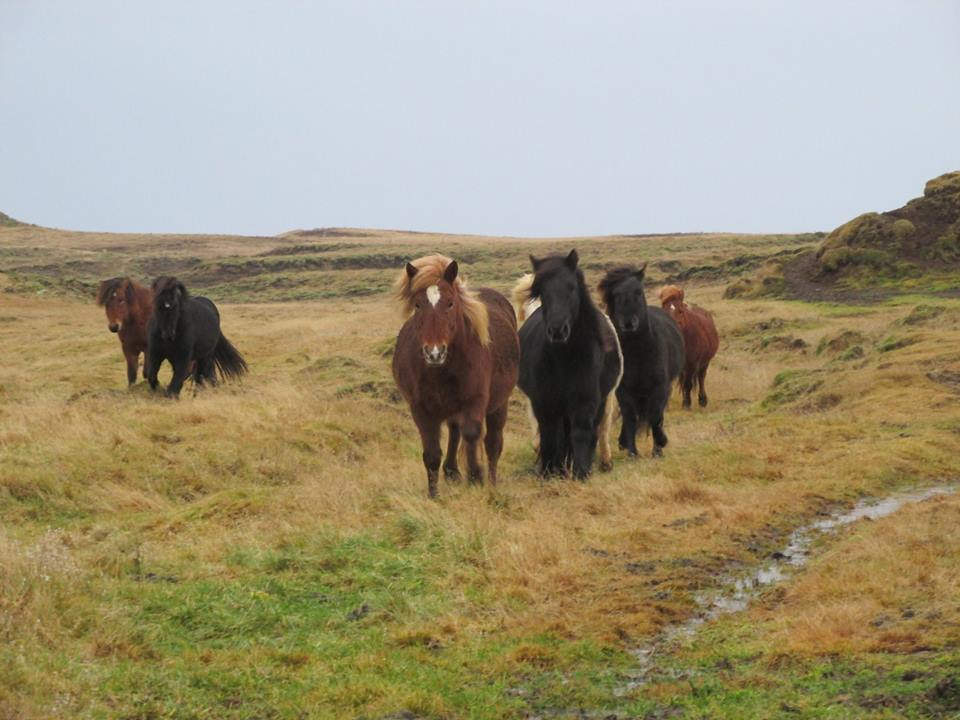 Frühjahrskur fürs Pferd