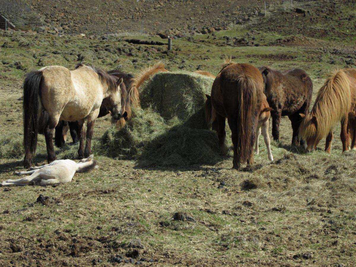 Tipp zum Anweiden von Pferden