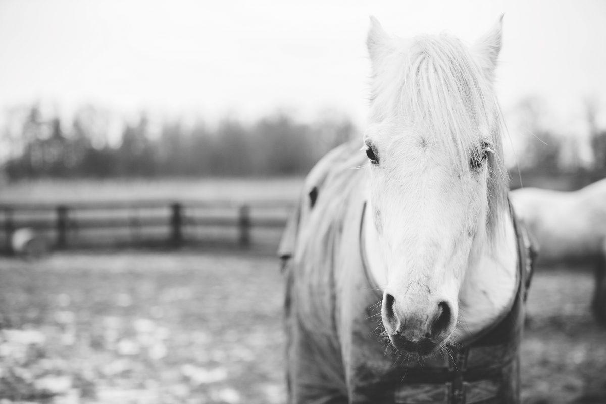 Mauke beim Pferd – was hilft?