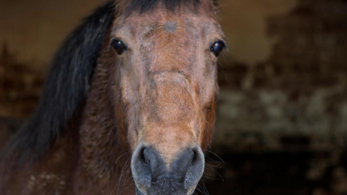 Mein Pferd hat eine Allergie- was tun aus ganzheitlicher Sicht