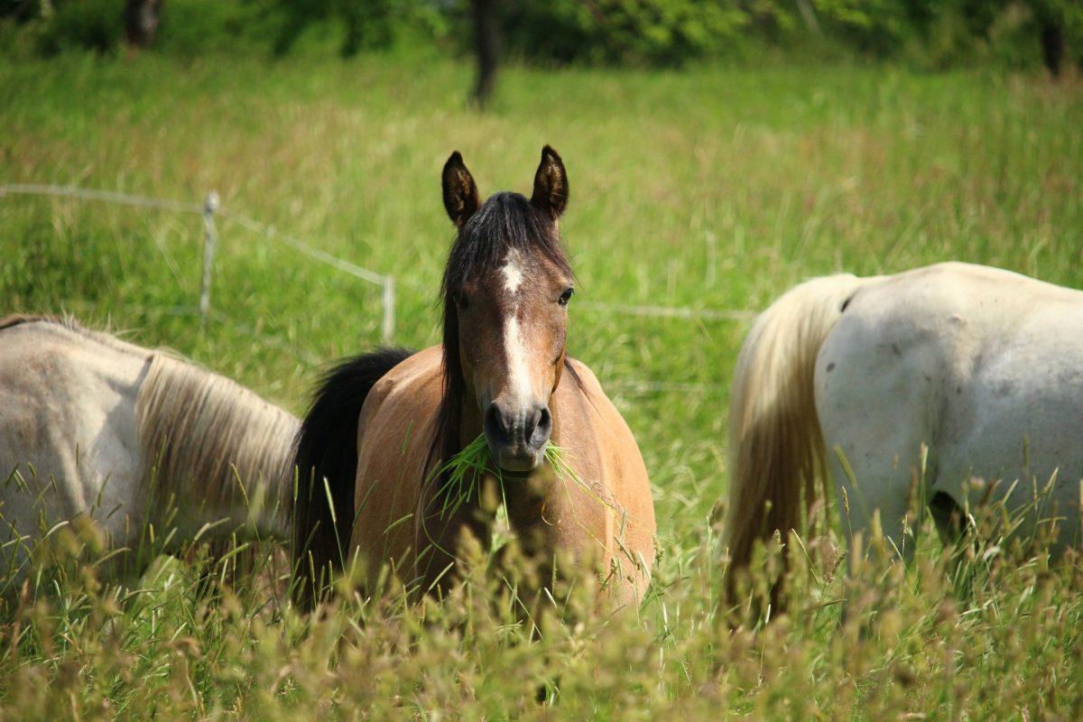Hilfe mein Pferd ist allergisch