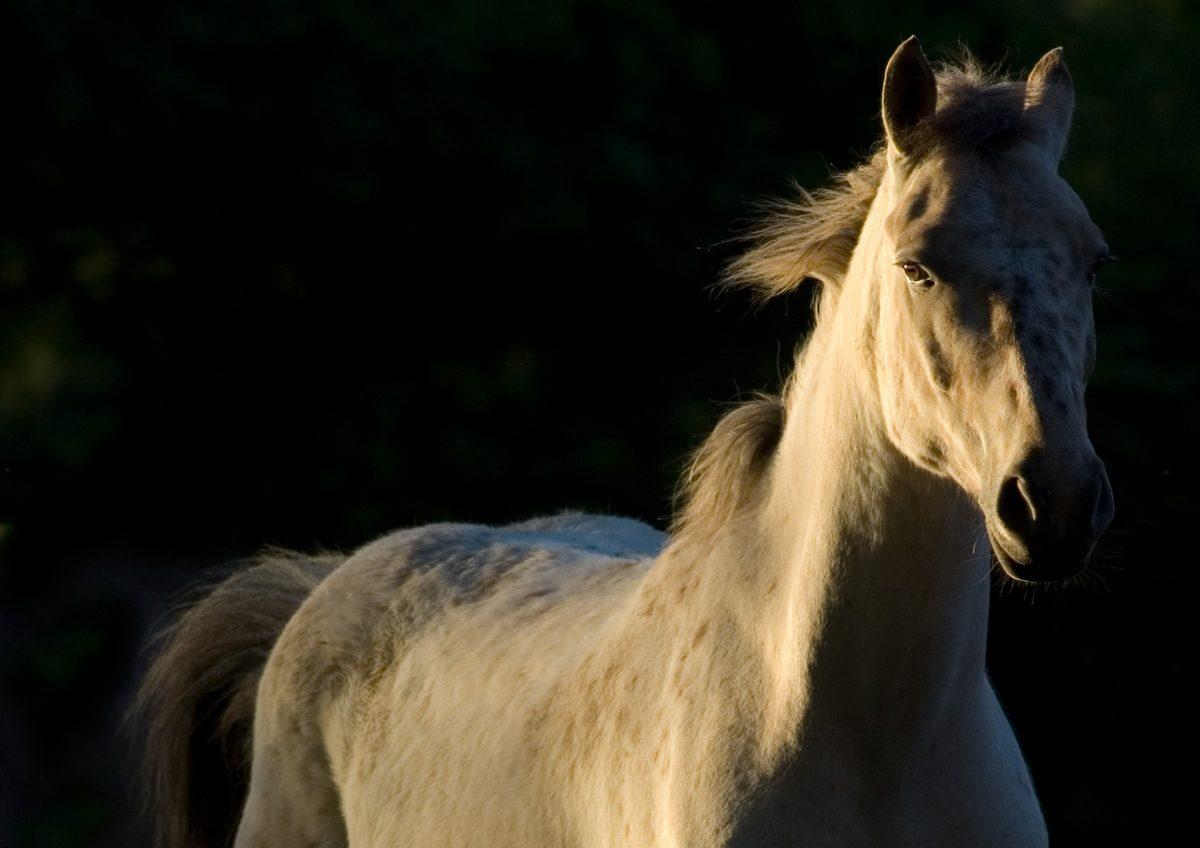 Hilfe, mein Pferd stolpert! Was tun?