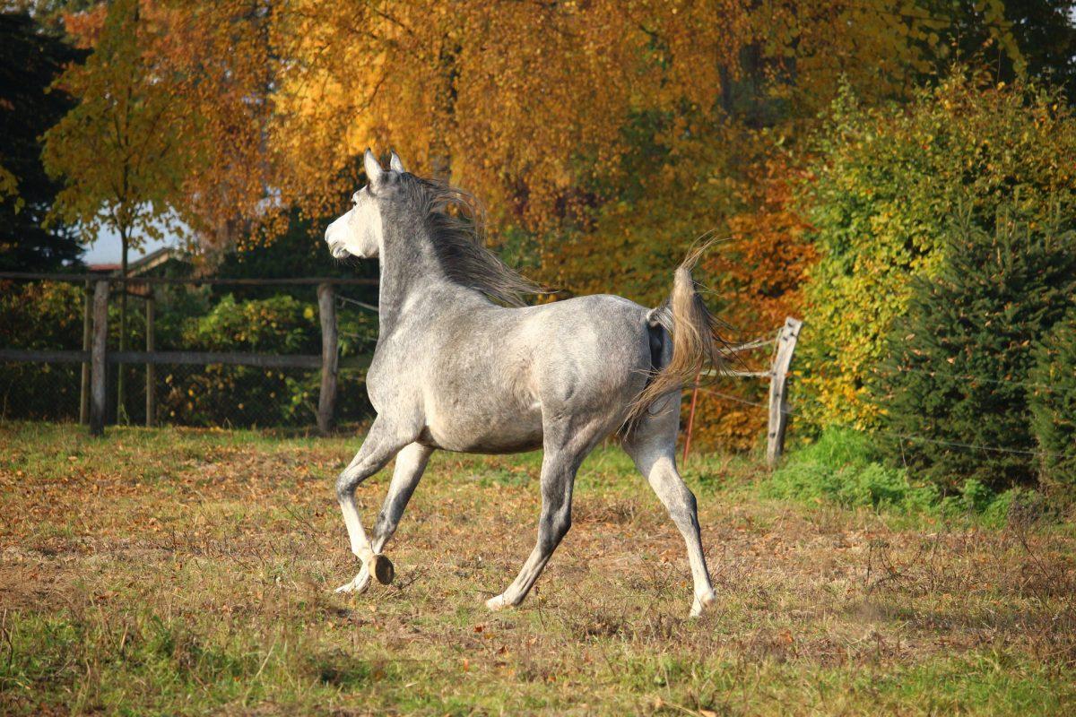 Ende der Weidesaison für Pferde