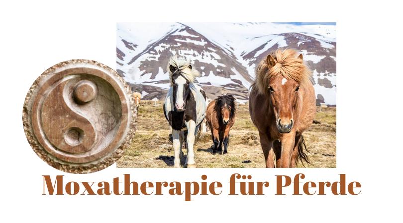 Moxa Therapie für Pferde, was ist das?